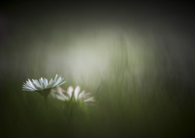 Fleurs 24