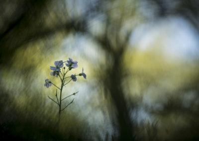 Fleurs 40