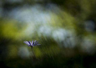 Fleurs 43