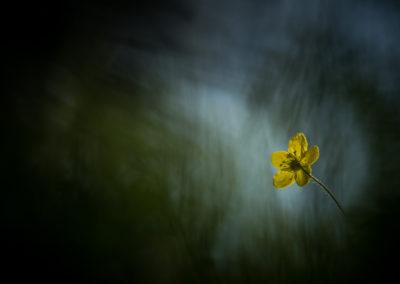 Fleurs 38