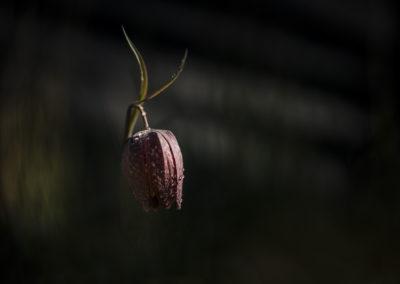 Fleurs 45