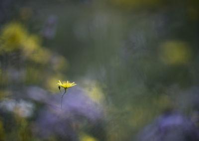 Fleurs 27